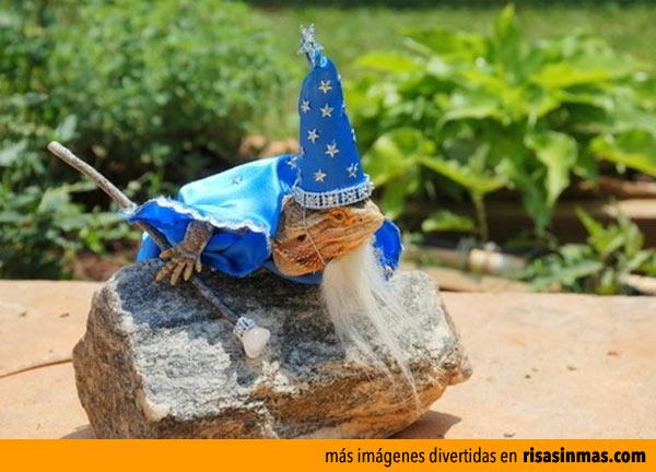 El lagarto Merlin