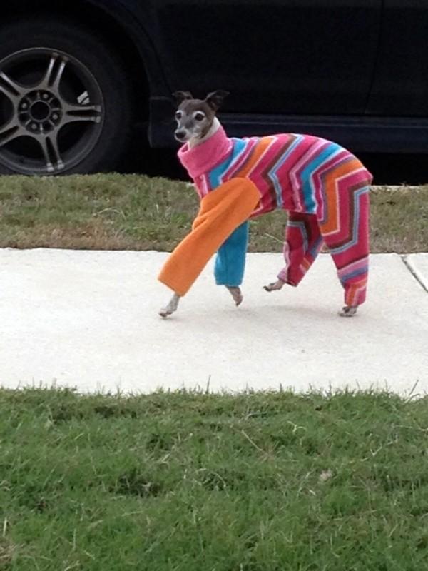 El perro de Ágatha Ruiz de la Prada