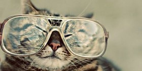 Gato hipster