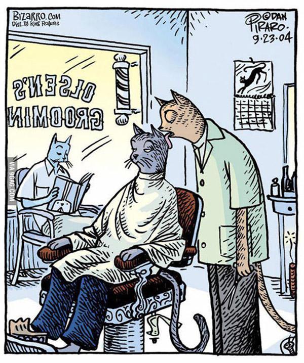 Gato peluquero