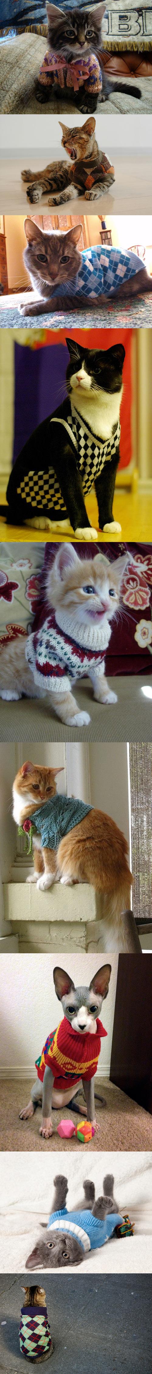 Gatos con jerseys