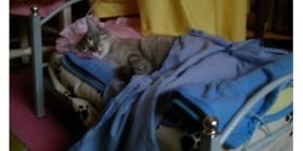 Gatos durmiendo en camas hechas a su medida