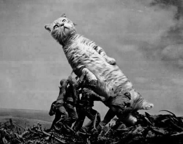 ¡Izad el gato!