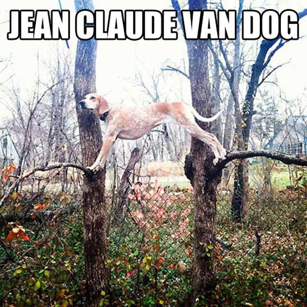 Jean-Claude Van Dog