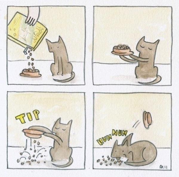 La lógica de los gatos