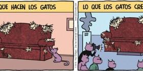 Lo que hacen los gatos