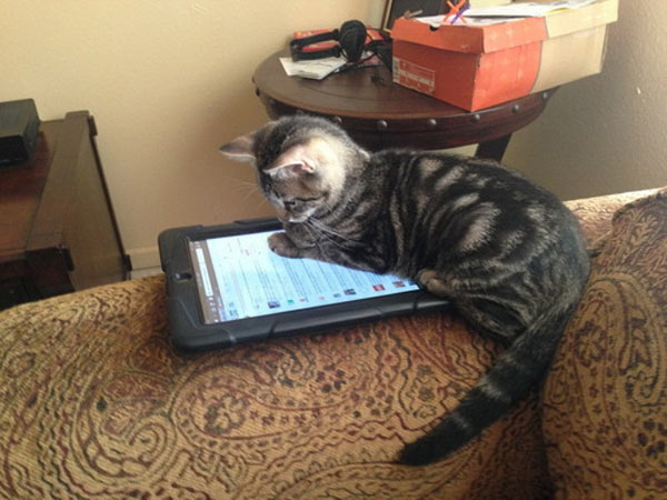 Los gatos también tienen su tablet