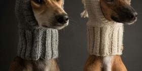 Los gorritos de moda para tu perro