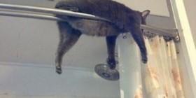 Mi gato duerme en cualquier sitio