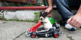 Mi perrito es seguidor de Fernando Alonso