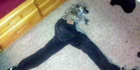 Mi perro con mis pantalones