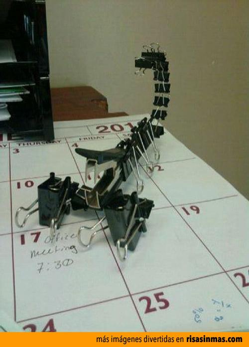 Nueva especie: Escorpión de oficina