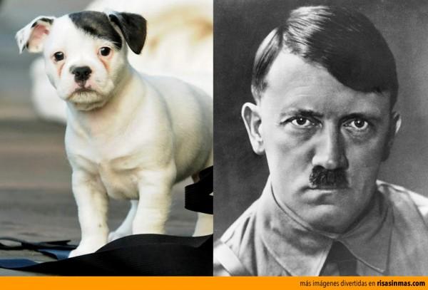 Parecidos razonables: perrito y Hitler