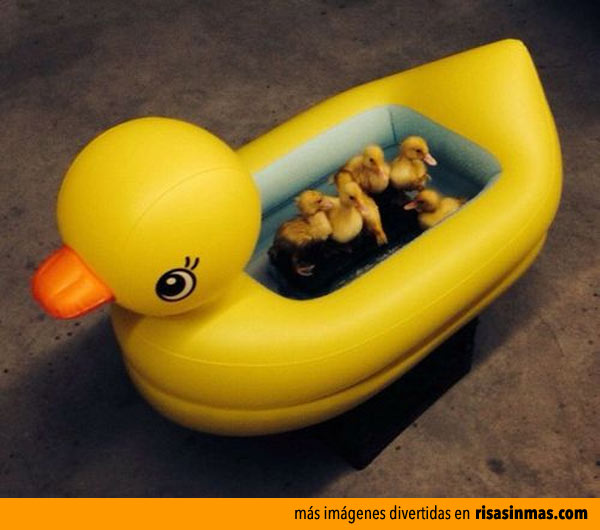 Patitos bañandose