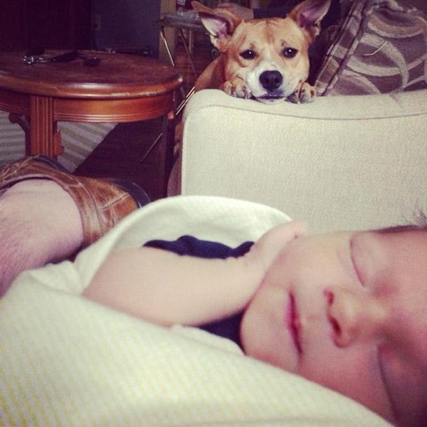 Perro vigilando al bebé