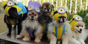 Perros Minions