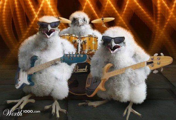 Pollitos rockeros
