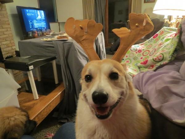 Scamp se prepara para la Navidad