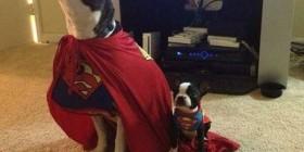 Superman y Superboy version perruna