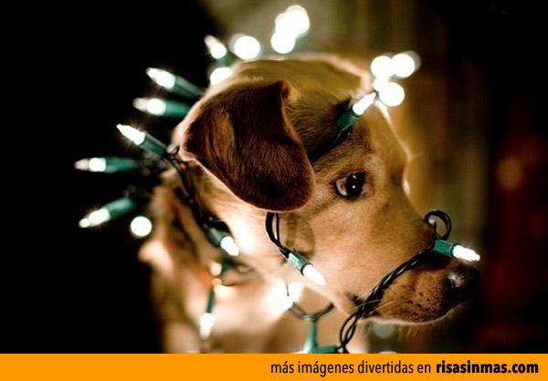 A mi perro le encanta la navidad