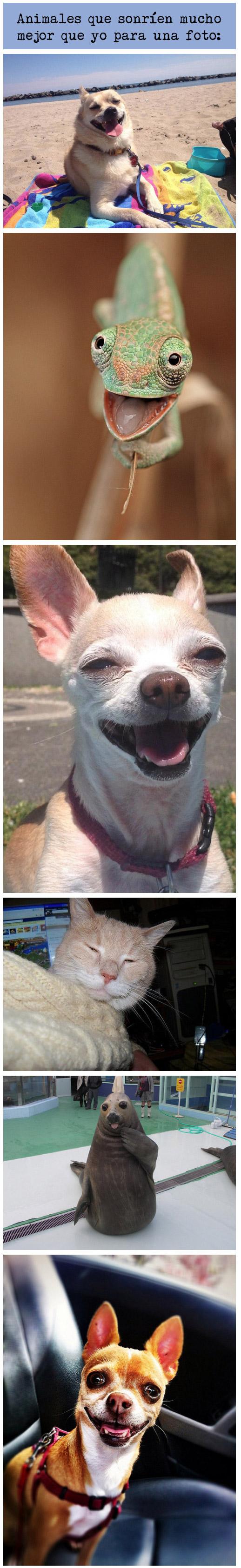 Animales que sonríen