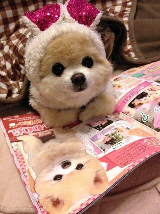 El perrito más tierno del mundo