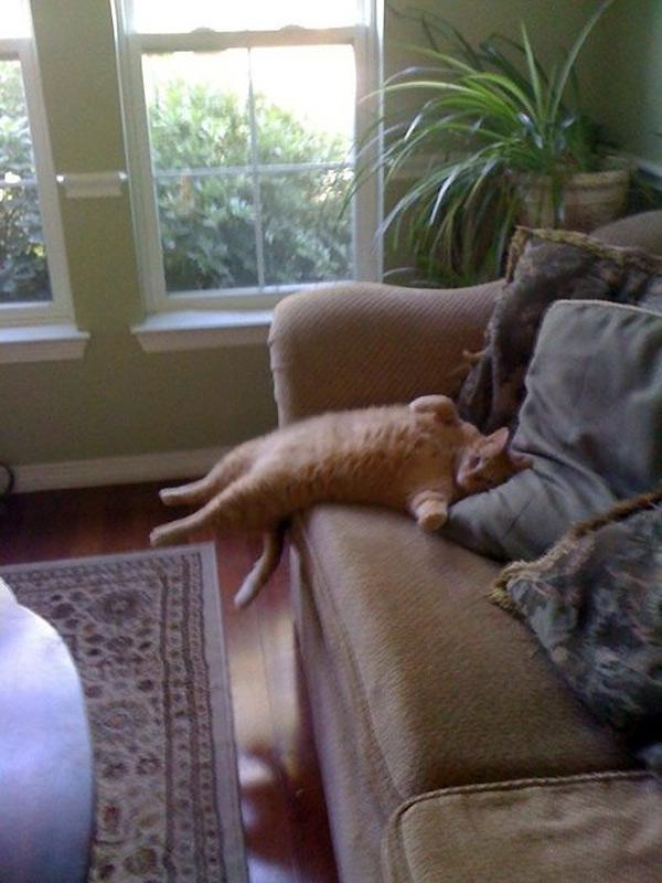 La aburrida vida de un gato cualquiera