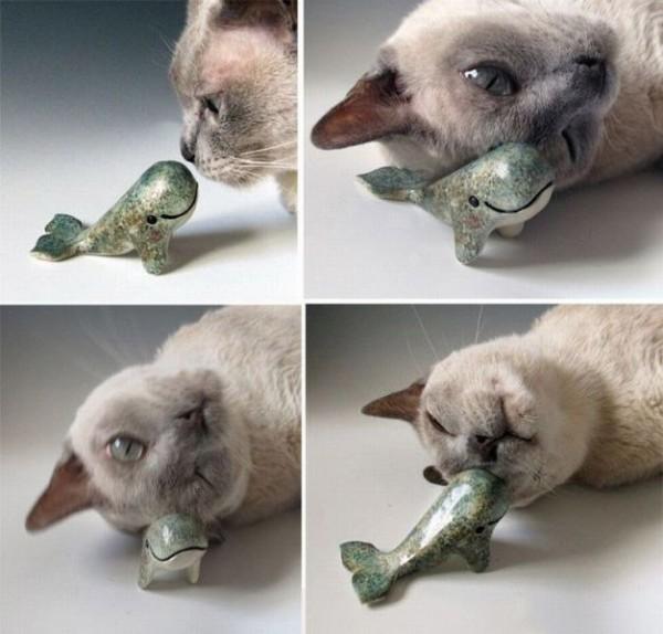 El gato que amaba a las ballenas
