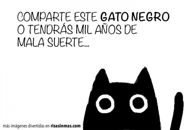 Comparte este gato negro