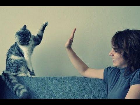Gatos chocando los cinco