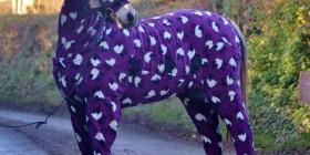 La moda llega a los caballos