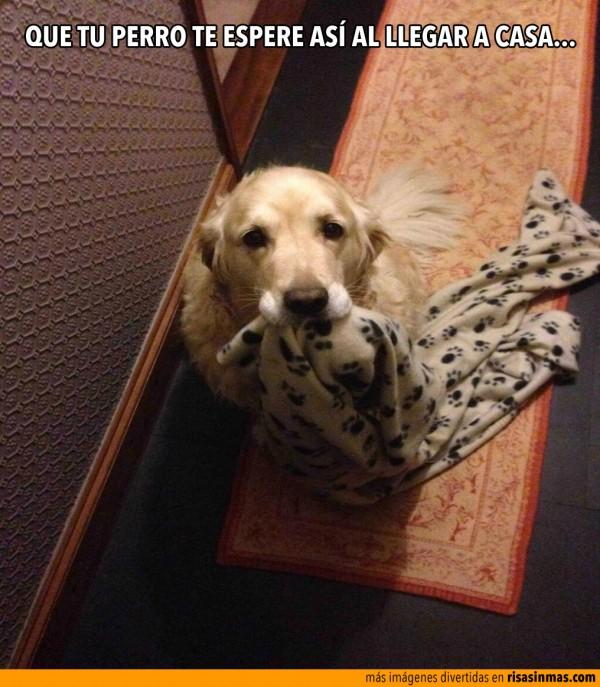 Que tu perro te espere así al llegar a casa