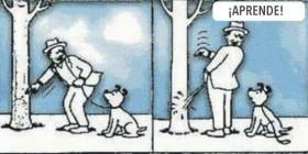 Aprende perrito, así se hace
