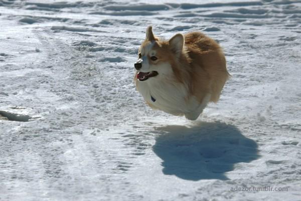 Nueva raza de perros voladores