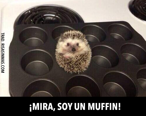 ¡Mira, soy un muffin!