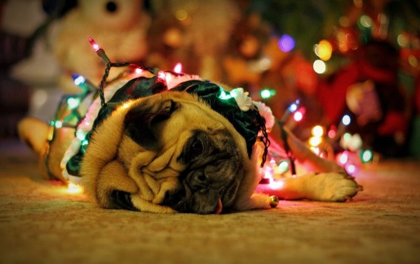 Agotado por las navidades