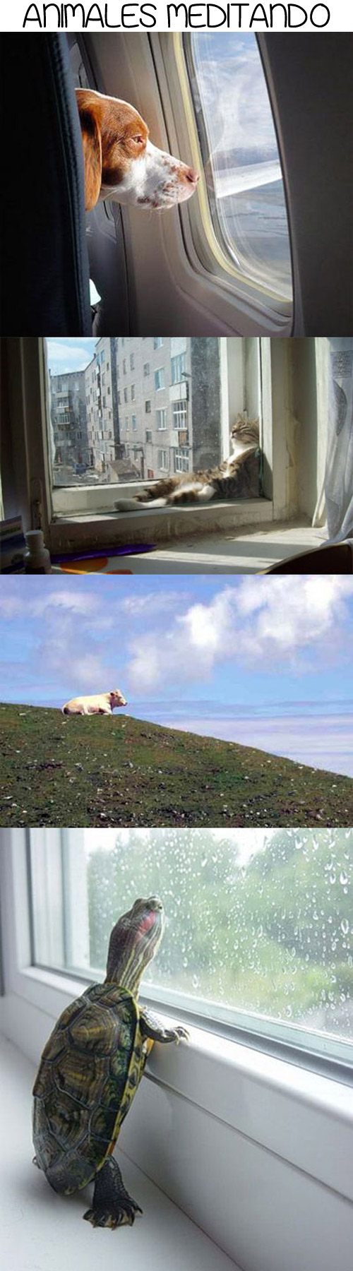 Animales meditando