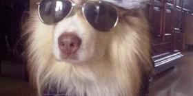 Axl Rose versión perro