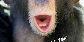 Chimpancé de viernes 13