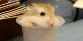 Chupito de Hamster