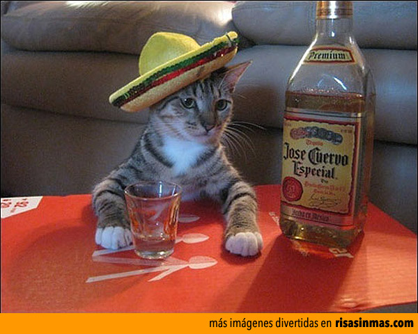 Creo que mi gato es mexicano