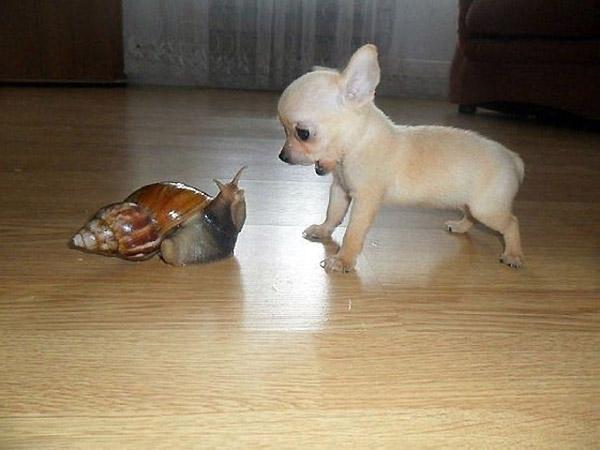 Cuando un caracol es casi tan grande como tú