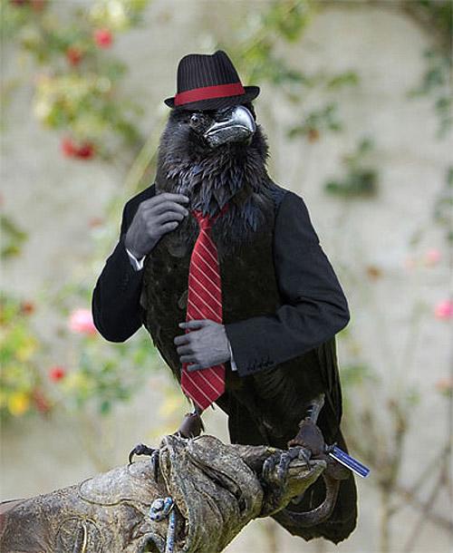 Cuervo gánster