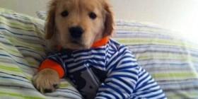 ¡Curro a dormir!