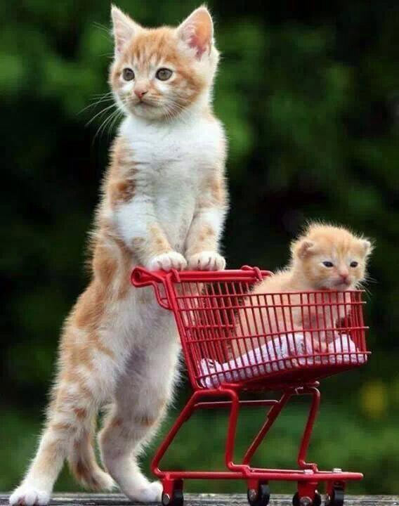 De compras con tu hijo