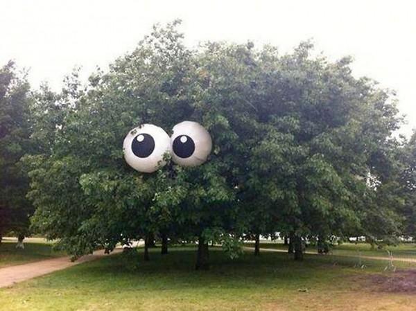 El árbol más divertido del mundo