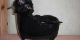 El baño del gatito