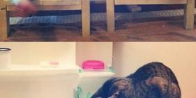 El gato Toco y su amiga