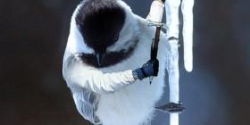 El pájaro escalador