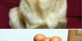 El perro equilibrista